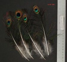 "Four 7.75"" to 8"" Whole Peacock Small Eye Sticks Millinery/Feather Arts"