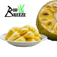 100% Pure Natural Dehydrated Jackfruit Product of Ceylon   Free Shippping 