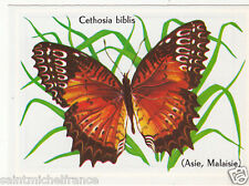 PAPILLON INSECTE BUTTERFLY CETHOSIA BIBLIS LEPIDOPTERE ANNEE 60s