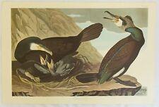 rThe Birds of America. Audubon. Common Cormorant. Amsterdam Edition.