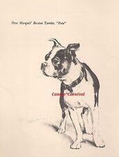 "Vintage Dog Art Print 1941 Boston Terrier Dogs Super Cute Rare ""Pete"""
