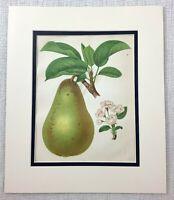 1877 Antique Botanical Print Pear Fruit Tree White Blossom Chromolithograph