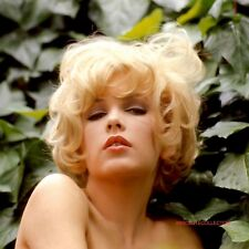 STELLA STEVENS LARGE FORMAT PHOTO 30X30 ou 40X40 / 11.80X11.80 or 15.75X15.75