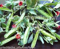 🔥  Spargel-Erbse * alte Gemüsesorte Bauerngarten* 10 Samen