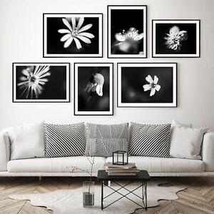 6 Immagini Fotografiche d'arredamento - 6 FLOWERS BLACK AND WHITE MACRO PHOTO
