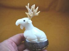 TNE-MOO-644A) white Moose TAGUA NUT nuts palm figurine carving in rut antlers