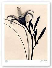 ART PRINT Daylily Judith McMillan