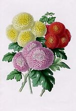 Botanicals 6~counted cross stitch pattern #2203~Flowers Floral Graph Chart