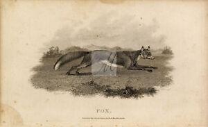 ANTIQUE Rural Sports Engraving - Fox Running Through Field #F180