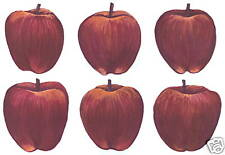 Apple Decals Wall Decorations Wall Art Decor Stickers Tatouage