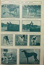 1911 INDIA ~ BOMBAY HORSE & DOG SHOW ~ POLO PONY SOBANI'S ALLEN'S LESLIE BLUNT'S