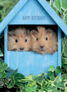 Animal Birthday Card - Guinea Pig Home