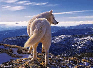 WOLF ON MOUNTAIN - 3D FLIP WOLF PICTURE 400mm X 300mm (NEW)