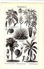 1900 Fiber Plants,Cannabis,Paper Mulberry,Java Cotton, Raffia Palm Antique Print