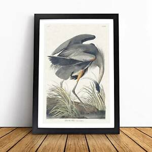 Great Blue Heron Landscape Bird John James Audubon Framed Picture Print Wall Art