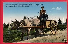 GASPE QUEBEC  CANADA OXCART  OX BOX FENCE ROAD   POSTCARD