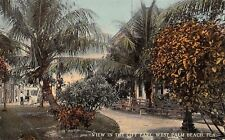West Palm Beach Florida~City Park Paths to Stores~Wooden Benches~Palms~1908 PC