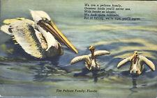 Pelican Family Fishing Florida Poem 1951  Postcard