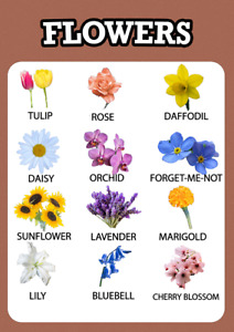 Flowers Educational Pre-school Wall Poster Chart for Kids Learning A3/A4