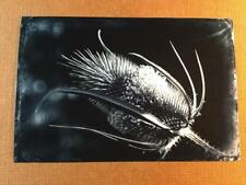 Ouch! J Edwards Original Art Tintype Limited Series From Artist C053