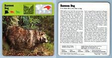 Raccoon Dog - Mammals - 1970's Rencontre Safari Wildlife Card