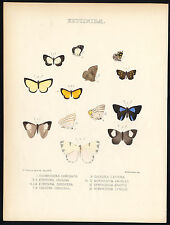 Antique Butterfly and Moth Print-ERYCINIDAE-EUSELASIA-MESENE-Hewitson-1875