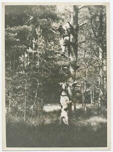 U259 Photographie originale vintage jeune homme arbre chien Desloges Chaumont