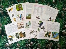 Vintage Bird Ephemera for Arts and Crafts 10 Sheets GORGEOUS IMAGES 8""