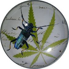 Crystal Dome Button Blue Bug on Leaf wPaper  BUG-10 FREE US SHIPPING