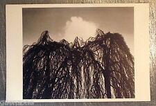 Carte postale Bad Pyrmont Tuna Ciner 1980, arbre  postcard