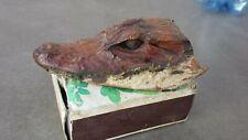 Tête bébé crocodile alligator naturalisée. Étrange, curiosité Long 10 cm