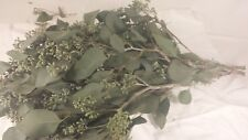 Seeded Eucalyptus, Fresh Cut, wholesale, DIY-fresh greens & Foliage