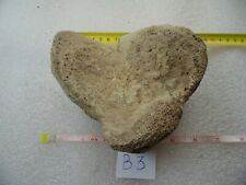 Fossil paw of a woolly mammoth. Calcaneus. Pleiscocene. Rarely.
