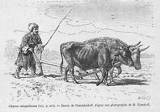 GEORGIE MINGRELIE GEORGIA SAMEGRELO CHARRUE MINGRELIENNE GRAVURE ENGRAVING 1881