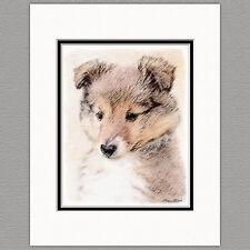 Shetland Sheepdog Puppy Sheltie Original Print 8x10 Matted to 11x14