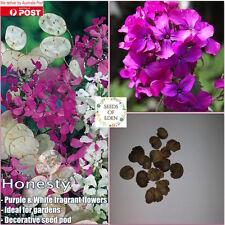10 HONESTY SEEDS(Lunaria Annua); Ideal for gardens