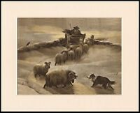 BORDER COLLIE SHEPHERD AND SHEEP WINTER SCENE DOG PRINT MOUNTED READY TO FRAME
