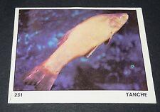 N°231 TANCHE POISSON PANINI 1970 TOUS LES ANIMAUX EDITIONS DE LA TOUR