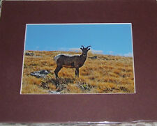 PHOTO ART MOUNTAIN GOAT MT EVANS CO 5X7 MATTED TO 8X10 SIGNED #'D 60/125
