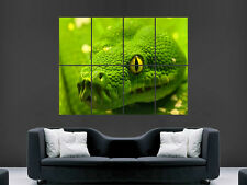 SNAKE POSTER ANACONDA GREEN REPTILE  PRINT IMAGE PRINT PICTURE