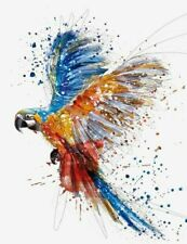 Colourful Parrot  Canvas Wall Art 20x16''  Framed