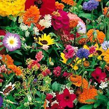SCHMETTERLINGSWIESE - Blumenwiese - Sommerblumen - Blumenmischung 500 SAMEN