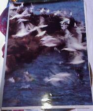 DUTCH ART PRINT - PETER CORNELIUS - SEAQULLS  art poster