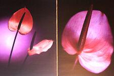 IKEA Bild Druck Poster Flohult Flamingoblume A4 Format 21 x 30  2 Stück NEU+OVP