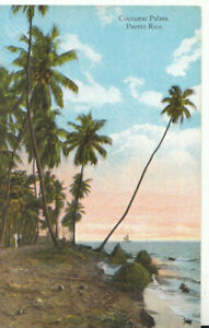 Caribbean Postcard - Puerto Rico - Cocoanut Palms - Ref TZ5544