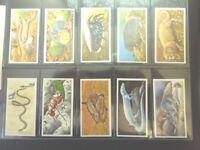 1985 Brooke Bond Tea INCREDIBLE CREATURES animals SHEEN  Trading set  50 cards