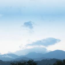 100 % Jamaican Blue Mountain Wallenford Estate, Medium Roast Ground Coffee   6oz