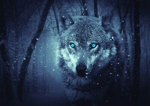 Wolf in the woods wildlife Photo Poster Print ONLY Wall Art A4