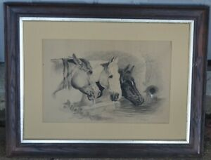 VINTAGE HORSE PICTURE S. B. RAYNER.