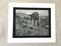 1900 Antique Military Print Boer War Cavalry Officer Soldier Horse